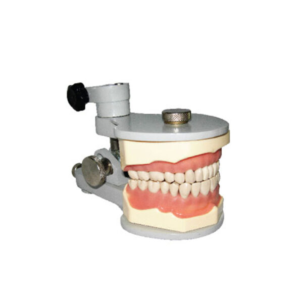 Jaw Set With Metal Articulator